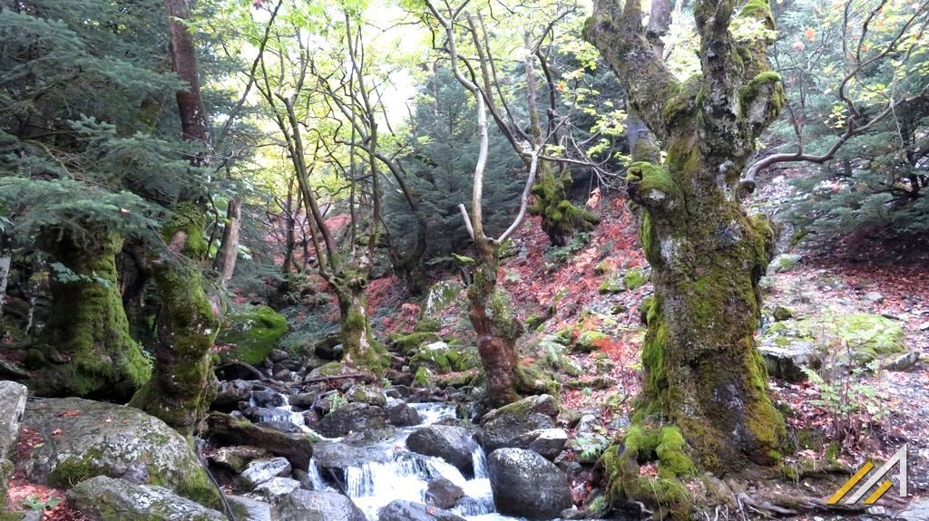 Wakacje w Grecji, trekking. Góry Tajget